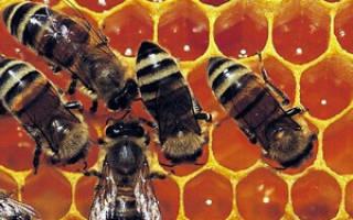 Лечение гастродуоденита медом и прополисом