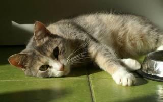 Лечение панкреатита у кошек и котов, как и чем лечить?