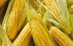 Можно ли кашу из кукурузы при гастрите?