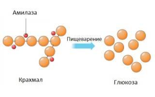 Амилаза поджелудочной железы при панкреатите
