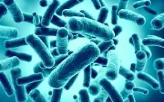 Бактериальная (инвазивная) диарея