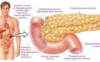 Кровоснабжение поджелудочной железы, схема