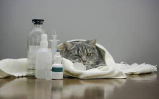 Некроз поджелудочной железы у собак – панкреонекроз