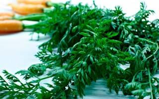 Лечение геморроя ботвой моркови, рецепт морковного чая