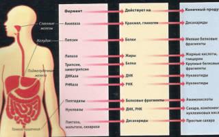 Анализ на ферменты поджелудочной железы