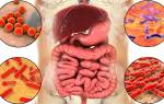Живые бактерии при дисбактериозе
