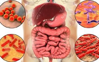 Средства против дисбактериоза кишечника взрослым