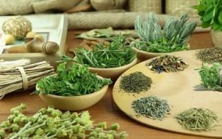 Лечение язвенной болезни желудка травами и растениями