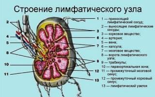 Лимфоузлы поджелудочной железы