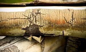 Кора осины при панкреатите