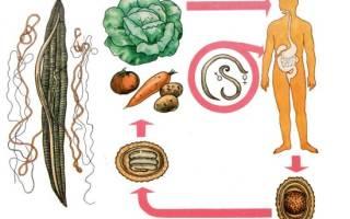 Паразиты поджелудочной железы – симптомы и лечение